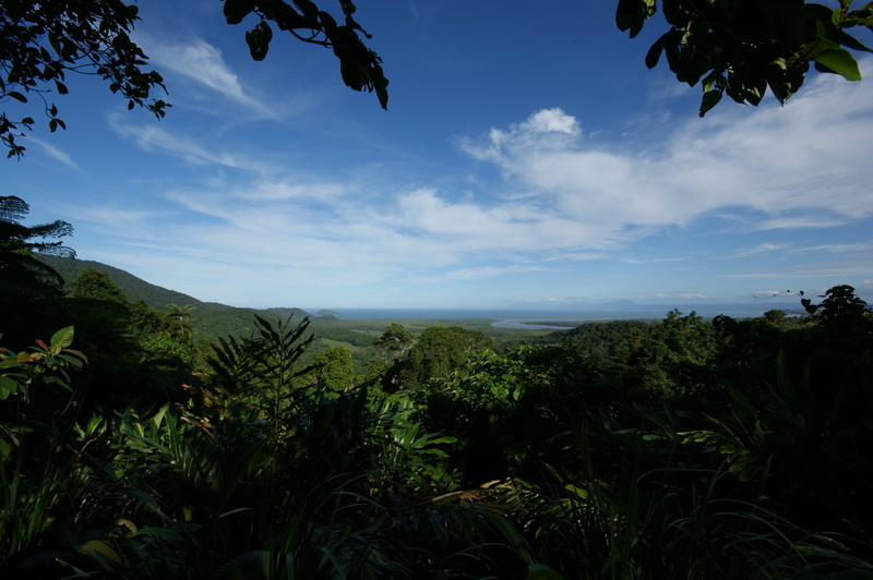 Regenwald des Daintree National Park