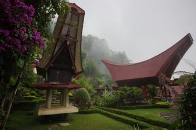 Sulawesi - Kannenpflanzen und Geweiheber (und noch vieles mehr)