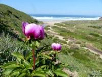 Algarve Bild 5.JPG