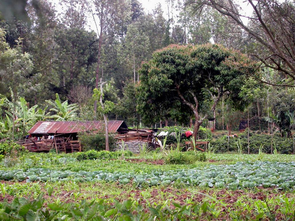 Wetland_bei_Karatina-Kenia_2008-09.jpg