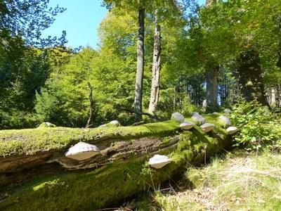 Naturwaldreservat am Ruppelstein