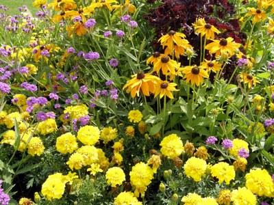 flower-power-buga-bingen.jpg