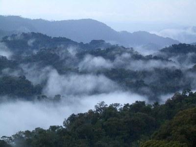 1nyungwe-nationalpark-ruanda.jpg
