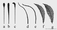 Grafik Tagfalter- und Nachtfalterfühler