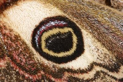Flügeldetail 2