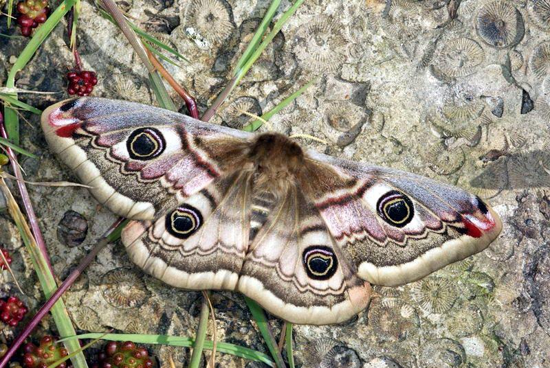 Weibchen 2