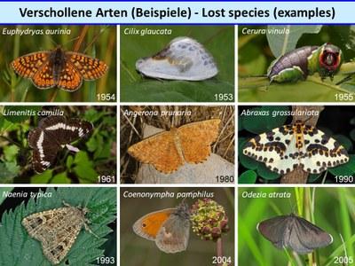 Verschollene Arten - Lost Species