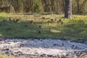 Nur noch ein Haufen Asche ist von den an Silvester entfernten Büschen übrig
