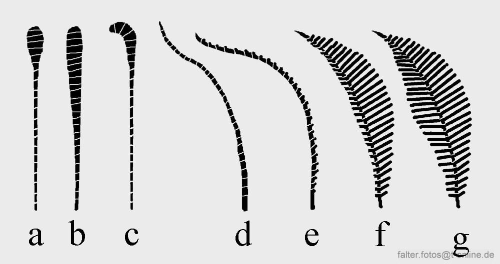 Grafik mit Schmetterlingen Nachtfalter