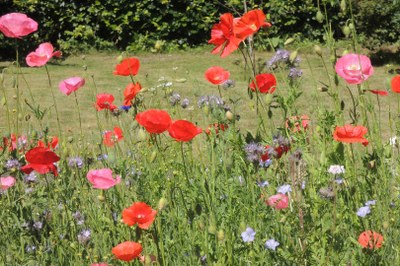 Blumenmeer im eigenen Garten