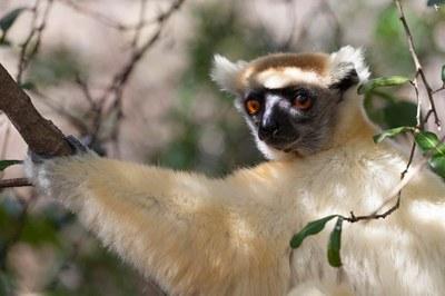 Lemuren auf Madagaskar Photo Astrid Padberg