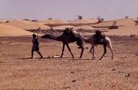 Van den Bruck, Durch die Wüste