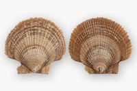 Fossile Schnecken