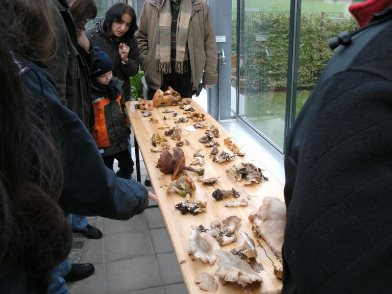Tisch mit Pilzen und Publikum